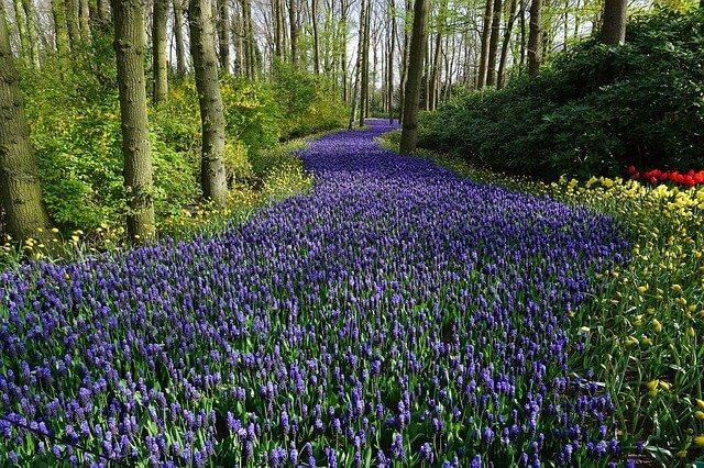 blumenmeer-flowers-2254234_640-komprimiert